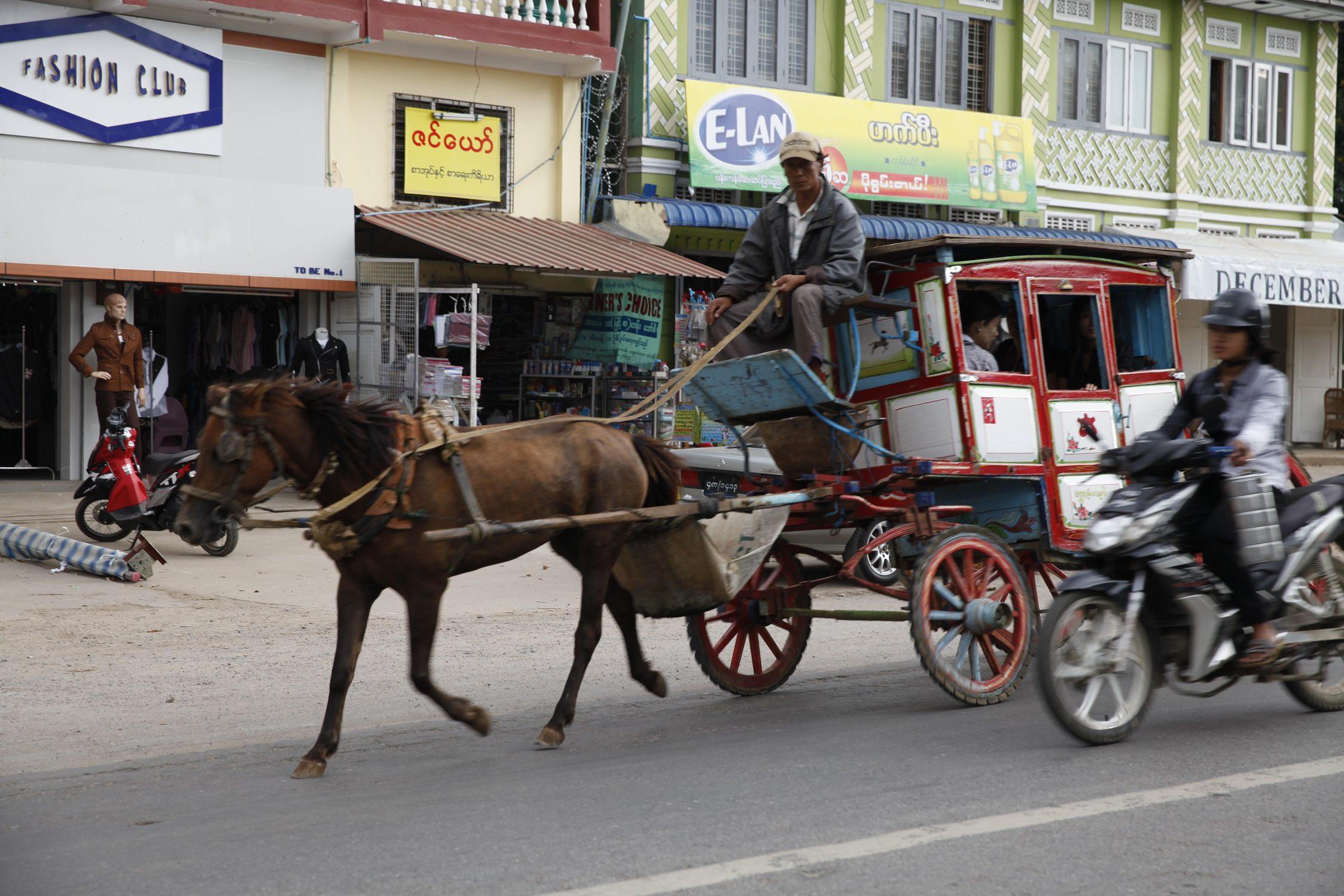 horse cart22